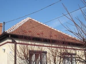 Rügyfakadás előtt felmértük a tetőt